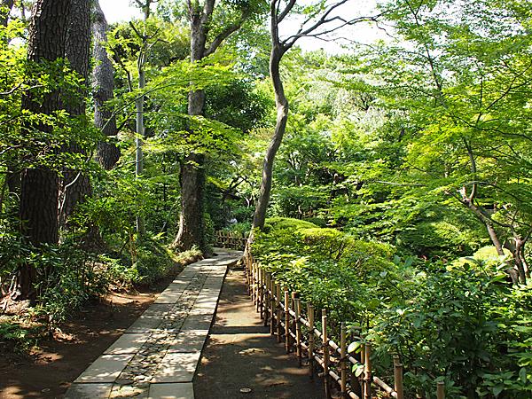 正門から本館へ。緑の木々が暑さを和らげてくれる。