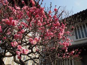 日本民藝館~梅の花